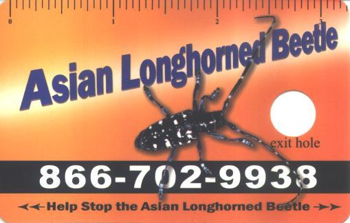 Asian longhorned beetle wallet card.  USDA Forest Service