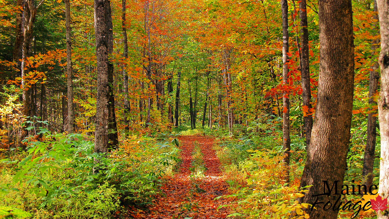 mainefoliage: photo gallery: foliage wallpaper