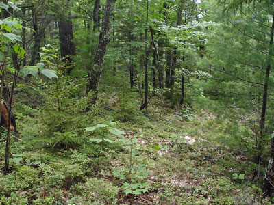 Community Maine For Natural Fact Areas Oak Sheet Forest Pine - Program