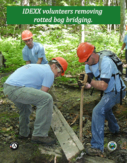 Idexx volunteers work on removing rotted bog bridge.