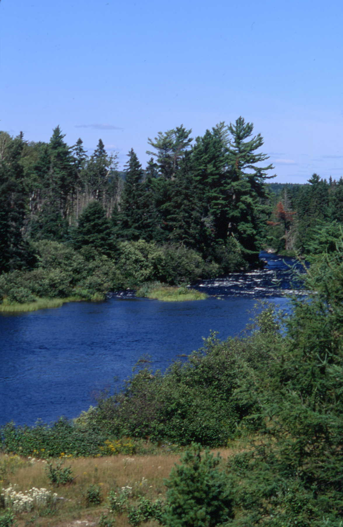 allagash wilderness waterway a natural history guide