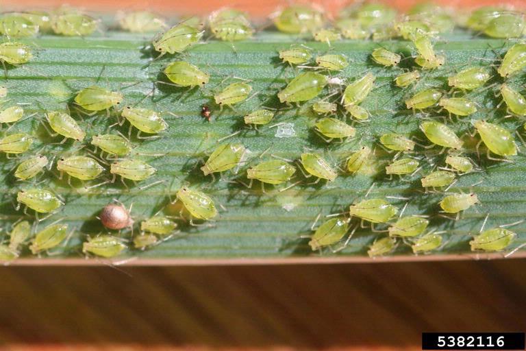 Got Pests?