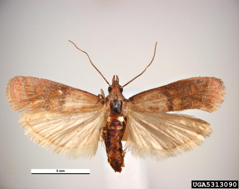 rodent inspection checklist mole cricket turf damage indian meal moths pictures best bait for. Black Bedroom Furniture Sets. Home Design Ideas