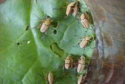 Got Pests