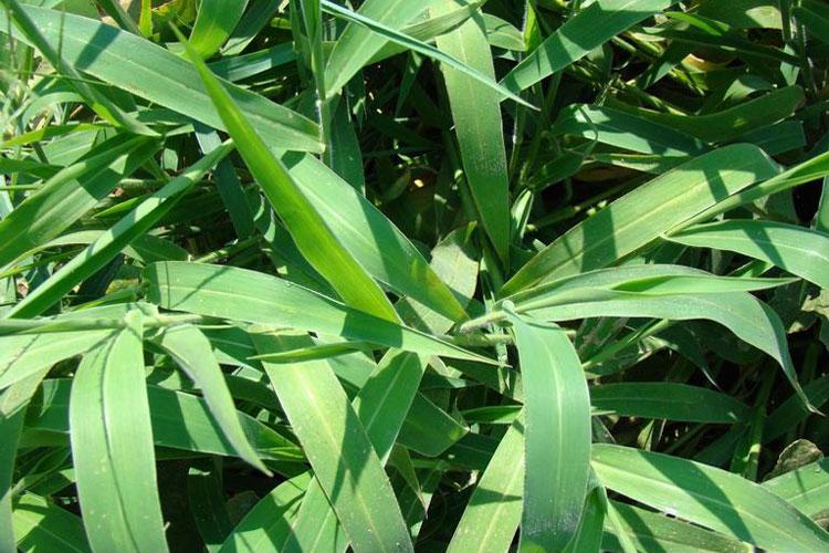Drive XLR8 Herbicide 12 Gallon 64 OZ KILLS CRABGRASS