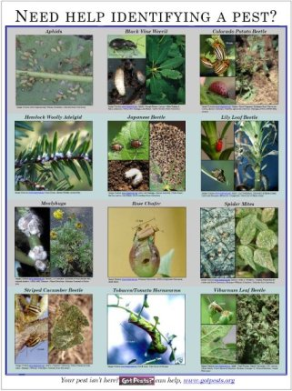 Pest ID Poster Horticulture APH Maine ACF