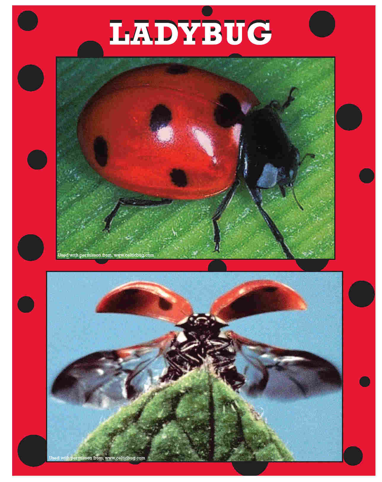 Maine school ipm program cards board ladybugs to the rescue insect body parts predatorprey relationships and diversity of life on earth robcynllc Gallery