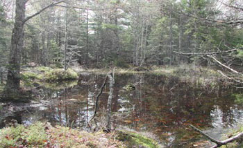 Picture of a vernal pool.