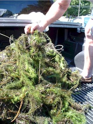 invasive aquatic plants cost share grants maine