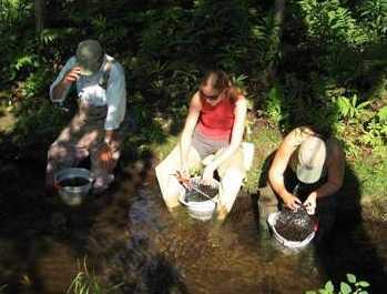 Biomonitoring River & Stream Macroinvertebrates, Monitoring and