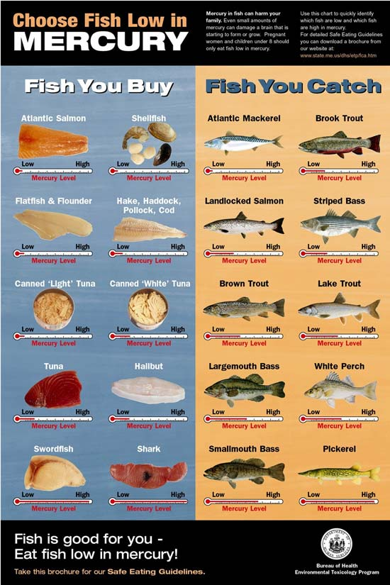 mercury in fish poster environmental and occupational health fish pictures 550x825