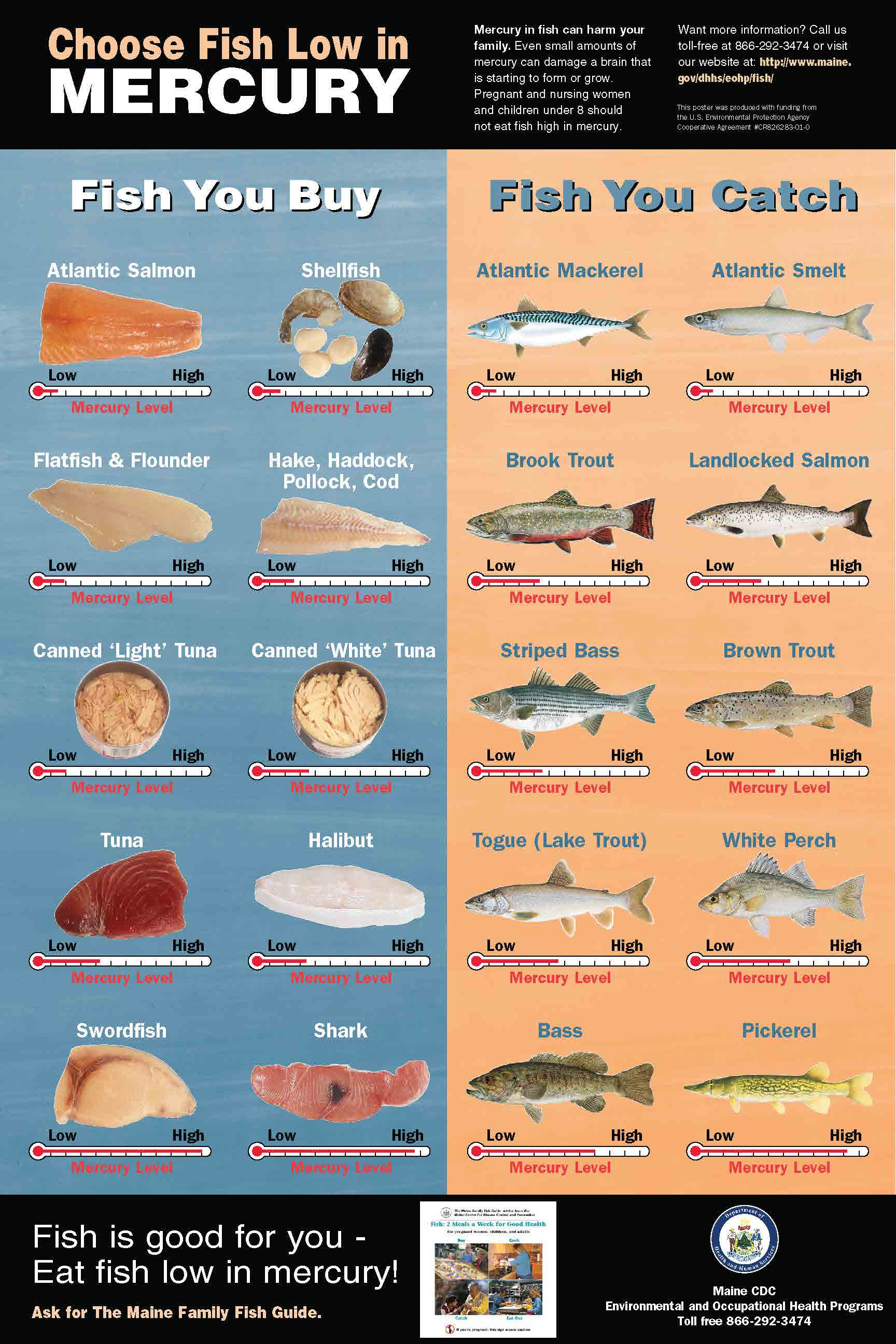 Department of the blank of blank for Mercury levels in fish chart