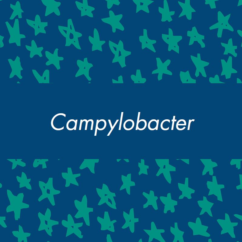 campylobacter vocabulary card