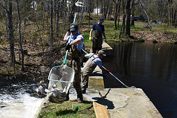Togus Stream River Herring Restoration