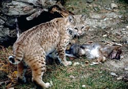 Delaware Valley Cat Rescue