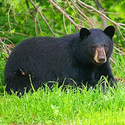 Federal aid for wildlife management support wildlife for Maine fish wildlife