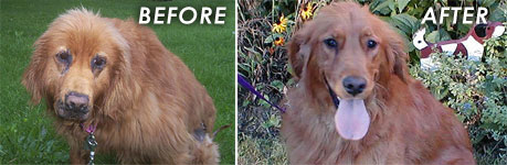Abused Dog - Before & After