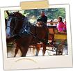 Horse Drawn Wagon - Leonard's Mills