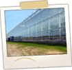 Tomato Greenhouse - Backyard Farm-Madison
