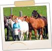 Herding Horses