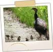Turkey Family - Kerns Hill Rd