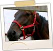 Horses - Burnham Road