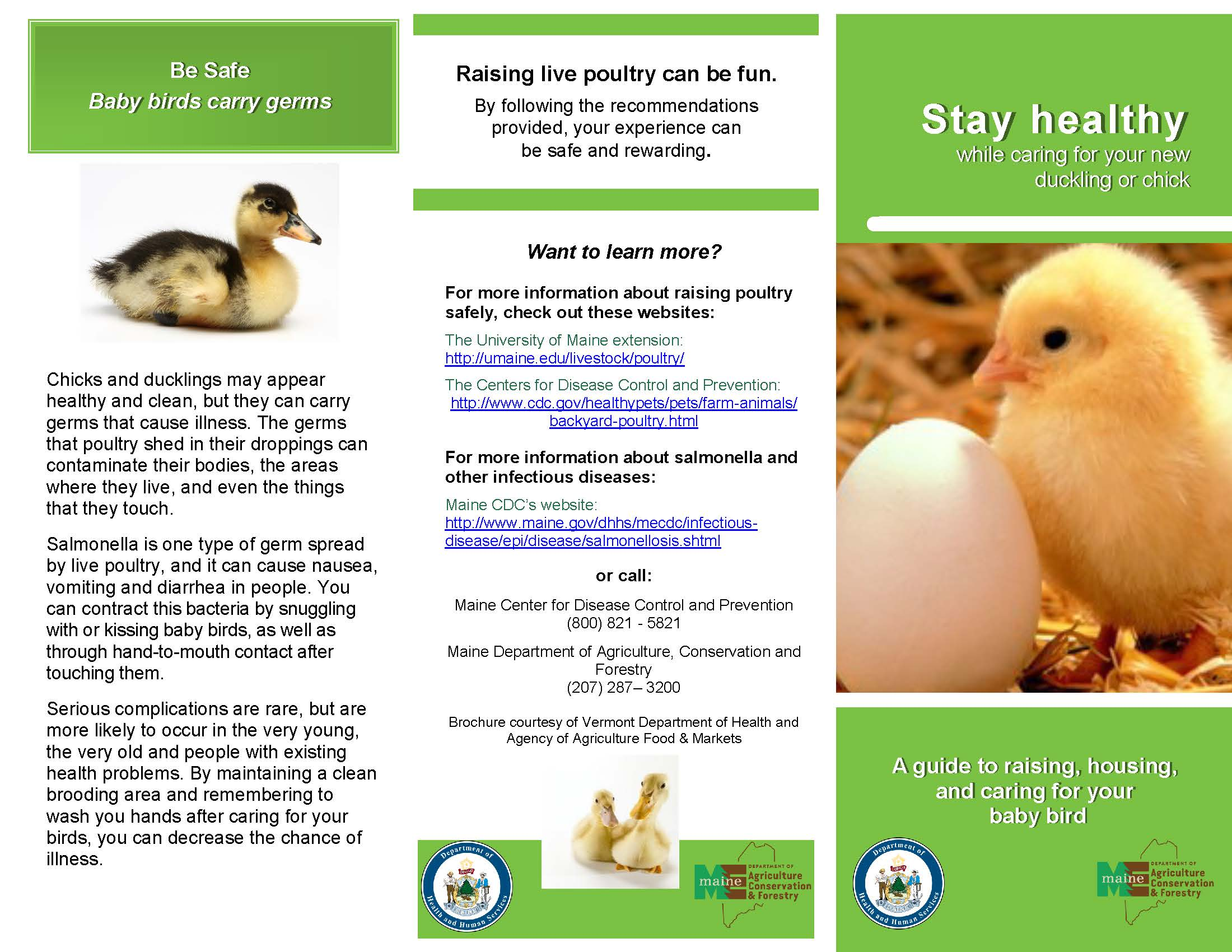 Baby Chicks and Salmonella