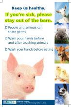 AG Flu Pig Poster