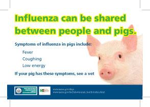 AG Flu Pig Postcard