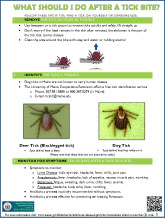 What Should I do After a Tick Bite