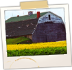Old Mustard Barn in Potato Field