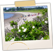 Roque Bluff Beach - Machias