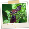 Deer on Sunshine Rd