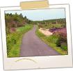 Sipayik Trail